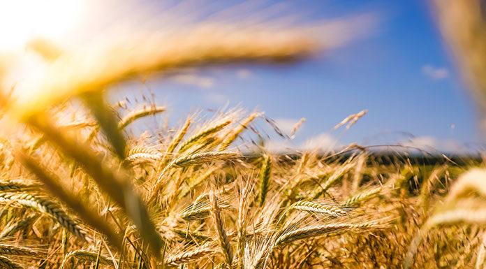 Sprzęt budowlany i maszyny rolnicze po leasingu na najlepszych serwisach aukcyjnych